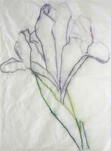 Laura Modolo, Iris, disegno cucito su carta